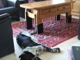 Lobke kan weer lekker onder de tafel