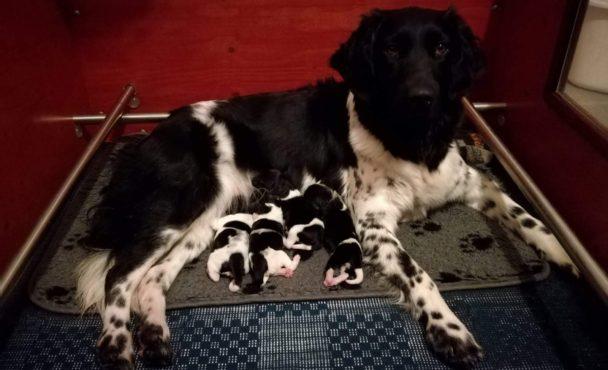 R-nest pups geboren